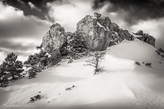 Winter solitude (Christos Andronis) Tags: winter light snow fog mystery solitude quiet meditation softlight contemplation landscapephotography     inmonochrome