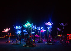 Pulse and Bloom (SmallTransgressions) Tags: man art burning installation bloom pulse 2014