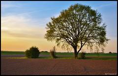 DSC_7454 (raphaelgonzalez10) Tags: soleil belgique ciel coucherdesoleil sunsetsunrise levdesoleil nikond3100