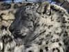 FACES (Janalene) Tags: animals zoo faces closeups