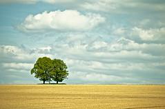 (jan.hrdina) Tags: tree field minimalism