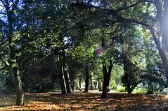 woodland wanderings (charlottehbest) Tags: november autumn trees colours arboretum gloucestershire autumncolours westonbirt autumnal westonbirtarboretum 2015 charlottehbest