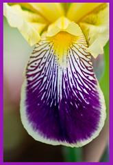 AH62_7652 (der_andyrandy) Tags: blumen blte flowers bunt macro canoneos7d amazingamazing