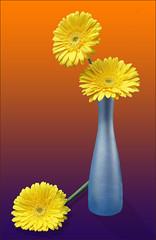 Blue vase (anthonyhepworth) Tags: flowers blue stilllife yellow vase