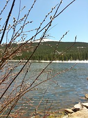 20160512_132735 (gobarbarams) Tags: echolake pussywillow idahosprings