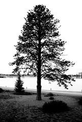 winter 1 (mr Cj photo) Tags: trees bw monochrome landscape flora canberra ghostly d80 nikond80 ozimages aussieimages