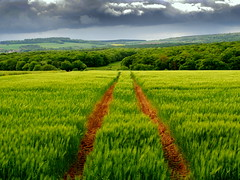 our green country (mujepa) Tags: france green barley champs tracks traces vert fields paysage lorraine ladscape orge