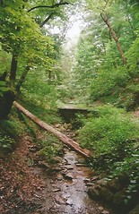 Lower Panther Hollow Trail, Schenley Park (trainphotoz) Tags: pittsburgh schenleypark pantherhollowtrail hollowruntrail