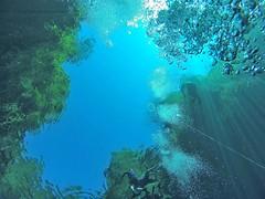Vista dentro da Lagoa Misteriosa (luisa_lima11) Tags: mergulho bonito lagoa misteriosa
