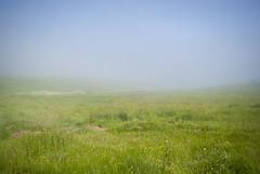 Sea Fog (Alexander Jones - Documentary Photography) Tags: sea mist west grass saint st fog wales landscape photography nikon documentary brides pembrokeshire d3000