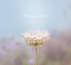 Summer edition (oze-lito) Tags: summer verano planta pastel ozelito nature