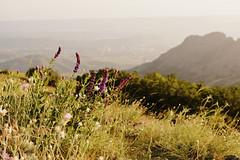 elizabeth_raccoon_45 (elizabeth_raccoon) Tags: summer russia mountains outdoor nature flowers field sky green
