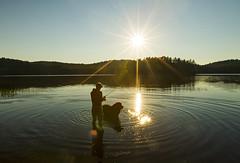 A Girl and her Dog (Matt Champlin) Tags: life camping sunset summer dog sun nature beautiful outdoors fishing hiking courtney peaceful adirondacks sunburst doggie murphy adk newf newfoundlands 2016