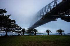 Bradfield Park (Leighton Wallis) Tags: fog sunrise dawn sony sydney australia nsw newsouthwales alpha sydneyharbourbridge f40 milsonspoint 1635mm mirrorless a7r emount ilce7r