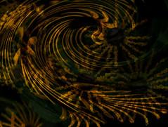 ouryard, rudbeckia subtomentosa henry eilers, jdy231 XX201208183.jpg (rachelgreenbelt) Tags: rudbeckia asteraceae blackeyedsusan asters floweringplants daisyfamily familyasteraceae asterfamily compositefamily magnoliophyta asterales heliantheae eudicots sunflowerfamily asteroideae orderasterales asterids asteraceaefamily tribeheliantheae compositaefamily subfamilyasteroideae rudbeckiasubtomentosahenryeilers asteralesorder heliantheaetribe asteroideaesubfamily spermatophytes helianthodae helianthodaesupertribe supertribehelianthodae asteridsclade campanulidsclade rudbeckiagenus