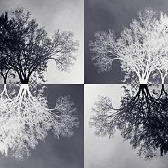 Treeflections 4