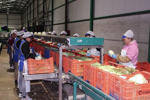 Línea de producción en CANSO
