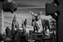 Nottingham Angels (mattrkeyworth) Tags: nottingham angel zeiss angels engel rockcemetery sal85f14z planart1485 laea3 sonya7r