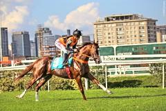 Jockey Club de São Paulo - Brasil (Will Carrara - By Will Eyes) Tags: brazil horses horse sports animal sport brasil speed canon eos sãopaulo jockey cavalos cavalo esporte esportes corrida jockeyclub 6d páreo ef70200mmf28lisiiusm2xiii willcarrara