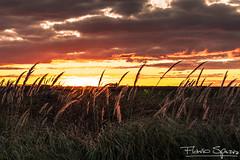 Skyline (FlavioSpezia) Tags: sunset sun sol skyline atardecer nikon campo horizonte d40