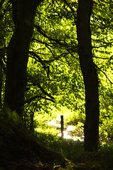 Summer Evening Memory (1963chris) Tags: trees summer sunlight nature water leaves contrast rural evening scotland countryside stream raw shadows highlights foliage greenery countrylane fencepost ayrshire darks nikond5100 stincharvalley