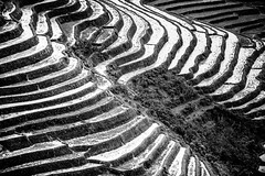 Paddy fields vietnam 8 (courregesg) Tags: travel bw mountain art history nature architecture montagne landscape women paddy traditional terrasse tribal nb unesco vietnam technic geology tradition agriculture yunnan ethnic paysage civilisation riz rizières ancestral patrimoine ethnology graphique historicalplace