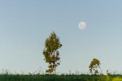 Lua cheia (mcvmjr1971) Tags: macro nikon sopaulo sigma sp f28 pascoa 150mm itatinga d7000 mmoraes fazendanirvana
