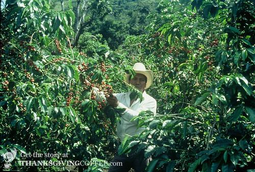 A Mexican Plantation Foreman