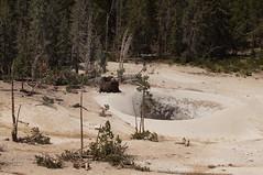 Sulpher Caldron (Tjflex2) Tags: buffalo yellowstonenationalpark bison