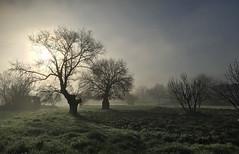 Rural dawn (VillaRhapsody) Tags: trees winter field rural sunrise turkey dawn fethiye kayaky challengeyouwinner