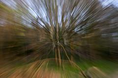 Newton Woods Bursting (Martin@Hutton) Tags: camera tree movement abstarct icm intentional