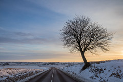 Winter scenery (Infomastern) Tags: road morning winter snow tree sunrise landscape countryside vinter sn trd soluppgng vg morgon landskap sdersltt landsbygd
