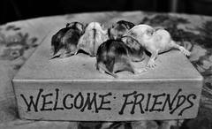 WELCOME FRIENDS (Mango*Photography) Tags: family friends pet baby white black love nature animals puppy photography vegan peace newborn hamster welcome hamsters giulia bergonzoni