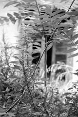 Abandoned yard (msiapan) Tags: house abandoned monochrome yard village cyprus σπίτι lefkara αυλή κύπροσ εγκατελειμμένο λεύκαρα