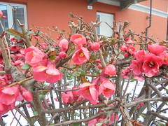 571 (en-ri) Tags: sony blossoms fiori fiorellini sonysti