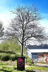 abc for trees (Harry Halibut) Tags: south sheffield yorkshire images allrightsreserved sheffieldbuildings colourbysoftwarelaziness imagesofsheffield sheffieldarchitecture 2016andrewpettigrew sheff1605041853