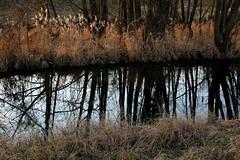 Di luce e d'ombra (lincerosso) Tags: river landscape fiume inverno seta paesaggio bellezza armonia luceeombra oderzo paesaggiofluviale colfrancui fiumelia silenziofrusciante