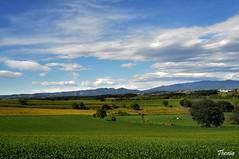 Parc els Gallecs (Gatodidi) Tags: barcelona naturaleza verde nikon arboles paisaje cielo nubes campo catalunya parc els catalua trigo valles gallecs molles d90 parets paisatje paisadje