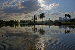 Israel (Hemo Kerem) Tags: street morning lake sunrise reflections israel telaviv minolta sony palmtree mf 24mm alpha manualfocus tlv rokkor wrokkor ganeiyehoshua minoltamdwrokkor24mmf28 a7rii sonya7rm2 a7rm2 ilce7rm2 ayrkonpark