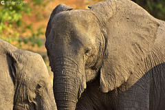15-09-20 Ruta Okavango Botswana (940) R01 (Nikobo3) Tags: travel parque naturaleza animals fauna nikon ngc delta unesco viajes animales botswana okavango d800 twop frica vidasalvaje omot deltadelokavango nikond800 rochobe nikon7020028vrii tc20eiii flickrtravelaward parquenacionalchobe nikobo josgarcacobo