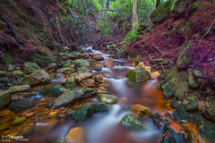 Newlands Forest Ravine - Cape town (Mujahid's Photography) Tags: forest landscape d800 westerncape newlandsforest landscapephotography nikond800 mujahidurrehman nikon1635 mujahidsphotography wwwmujahidurrehmancom