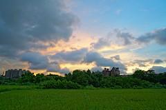 2016-07-07 18.53.10 (pang yu liu) Tags: 2016 07 jul   pate  typhoon  dusk farm