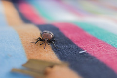 _MG_1442 (Arthur Pontes) Tags: color macro green nature bug insect picnic mini piquenique enseto
