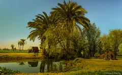 Sohag, Egypt (Ahmed Dardig) Tags: africa travel trees lake reflection car landscape photography egypt explore explored sohag southegypt