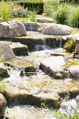11856262_10153099683517076_8983887454261958571_o (jmac33208) Tags: park new york roses rose garden central schenectady