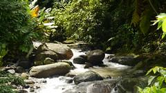 ro (Mayan_princess) Tags: chiapas argovia finca resort caf coffee kaffee paraso paradise vegetacin vegetation verde green ro river spa relajacin relax forest selva orgnico autosostenible