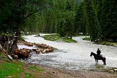 Sheep crossing river (MelindaChan ^..^) Tags: xiangjiang  sheperd sheep river animal chanmelmel melindachan mel mellinda  melinda ilikazakhautonomousprefecture  xingjiang
