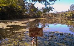 Proibido pescar (Nomaximo voc encontra botas e pneus) ( NEKO) Tags: life park blue parque green nature forest garden lago agua natureza sunny sp jardim lagoa floresta interlagos arlivre