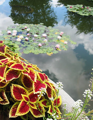 """""""Flora by Land and Sea"""" by My Lovely Wife (Puzzler4879) Tags: coleus waterlilies foliage aquaticplants bbg brooklynbotanicgarden botanicgardens flowersinplanters a580 canona580 canonpowershota580 canonpowershot powershot canonphotography canonaseries canonpointandshoot pointandshoot"""