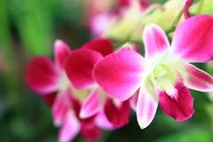 Beauty (Rajavelu1) Tags: flowers garden pink colours beauty art artland creative canon60d travel toor singapore